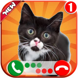 Instant Voice Game Call From Tiny Cat 🐈 -Free Text Message - Free Fake Phone Calls ID PRO 2020 - PRANK FOR KIDS
