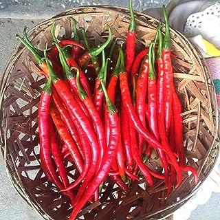 Hot Pepper Samen, 100Pcs / Bag Chili Samen Non GMO einfach zu wachsen Red voller Vitalität Gemüsesamen für Garten Ideal Outdoor-Garten Geschenk