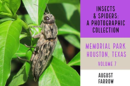 Insects & Arachnids: A Photographic Collection: Memorial Park: Houston Texas - Volume 7 (Arthropods of Memorial Park) (English Edition)