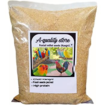 a Quality kangni Seed Bird Food Foxtail Millet Seeds for Birds 1 KG Pack