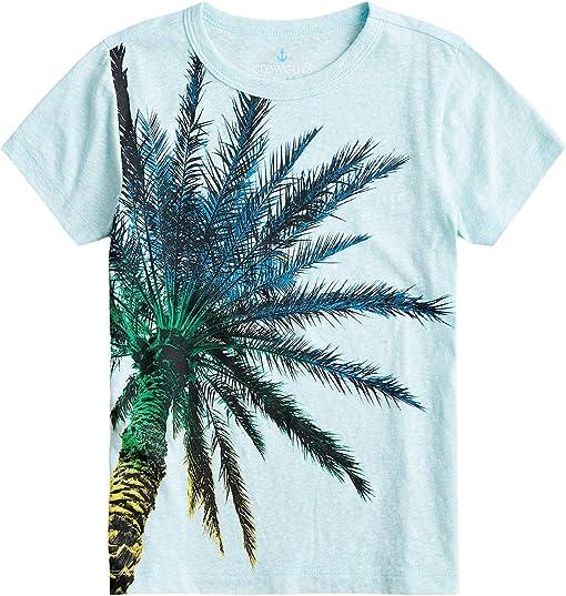 Rainbow Palm Tree