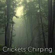 crickets chirping mp3