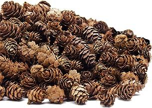 Deloky 250 PCS Christmas Natural Mini Pine Cones-Thanksgiving Pinecones Ornaments for DIY Crafts, Home Decorations ,Fall a...