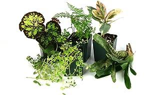 10 Gallon Tropical Vivarium Plant Kit