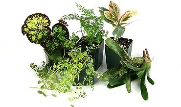 12x12x18 Tropical Vivarium Plant Kit