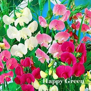 HOT - Everlasting Sweet Pea Mix - 55 Seeds - Lathyrus Latifolius - Perennial Flower