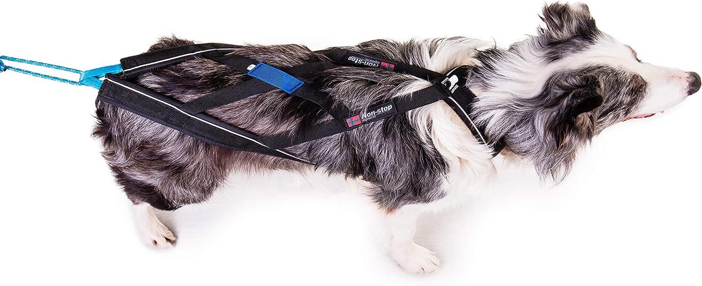 Non-Stop dogwear Non-Stop nome Harness