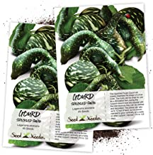 Seed Needs, Speckled Swan Gourd (Lagenaria siceraria) Twin Pack of 45 Seeds Each Non-GMO