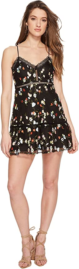Jack by BB Dakota Chaka Floral Embroidered Mesh Dress