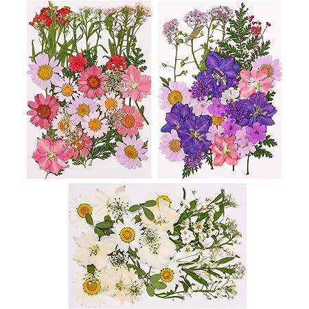 Xinzistar 105 pièces Ensemble de Fleurs séchées pressées naturelles pour bricolage Mélange fleurs séchées de DIY bougie peinture pour Décoration Nail Art Artisanat Maquillage