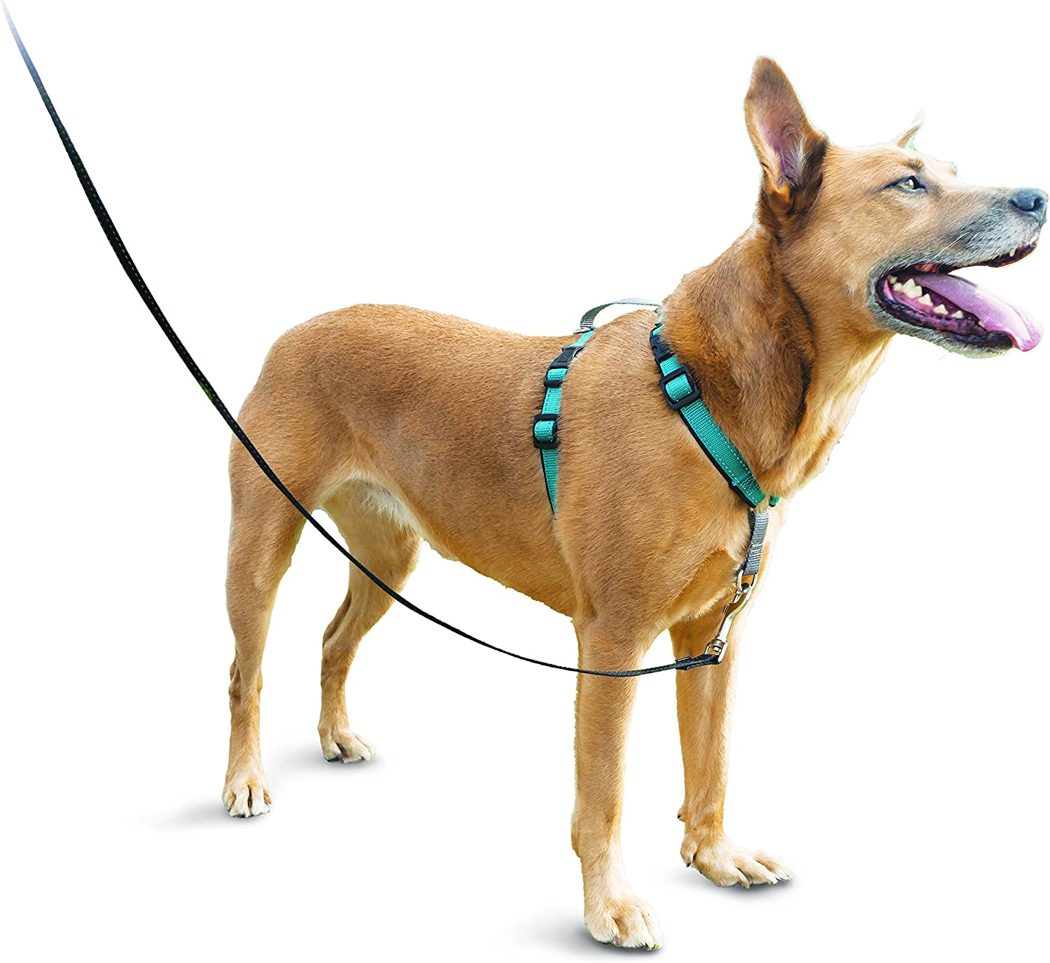 PetSafe 3in1 Harness, from The Makers of The Easy Walk Harness, Fully Adjustable NoPull Dog Harness