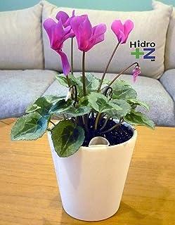 Maceta de autorriego Hidro+z en cerámica ecológica de 10 cm - Maceta inteligente para todo tipo de plantas