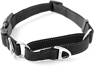 martingale dog collar with buckle