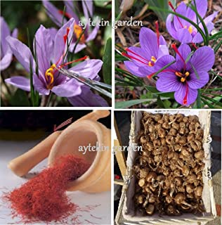 Saffron Bulbs 16 Pcs - Get Beautifull Flowers and Your Own Spice (Dispatch from Our Organic Garden) Crocus Sativus Corms
