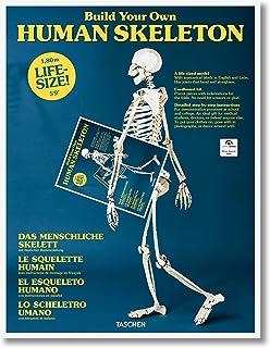El esqueleto humano (Varia