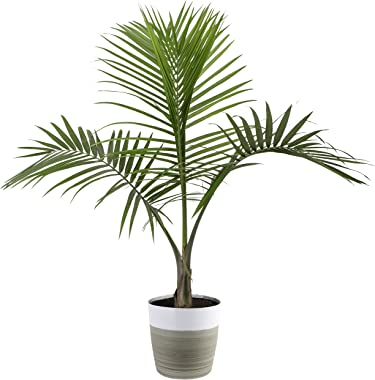 Costa Farms Majesty Palm Tree, Live Indoor Plant, 3 to 4-Feet Tall, Ships with Décor Planter, Fresh From Our Farm, Excellent