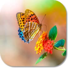 Best live wallpapers butterfly Reviews