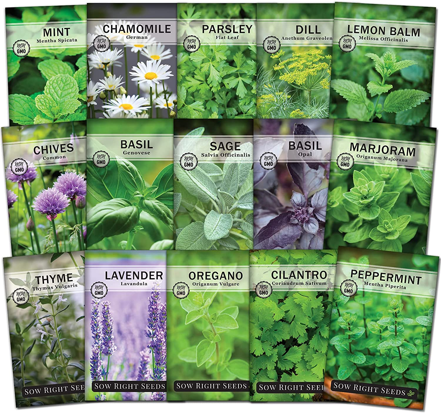 Sow Right Seeds - 15 Herb Garden Seed Collection - 15 Essential Herbs for Cooking; Non-GMO Heirloom Seeds; Full Instructions for Planting an Easy to Grow Kitchen Garden, Indoor or Outdoor; Great Gift…