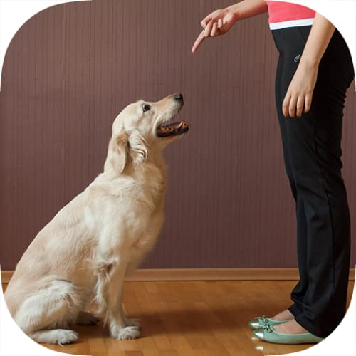 How To Train a Dog - Potty, Crate, Tricks, Tips & More.