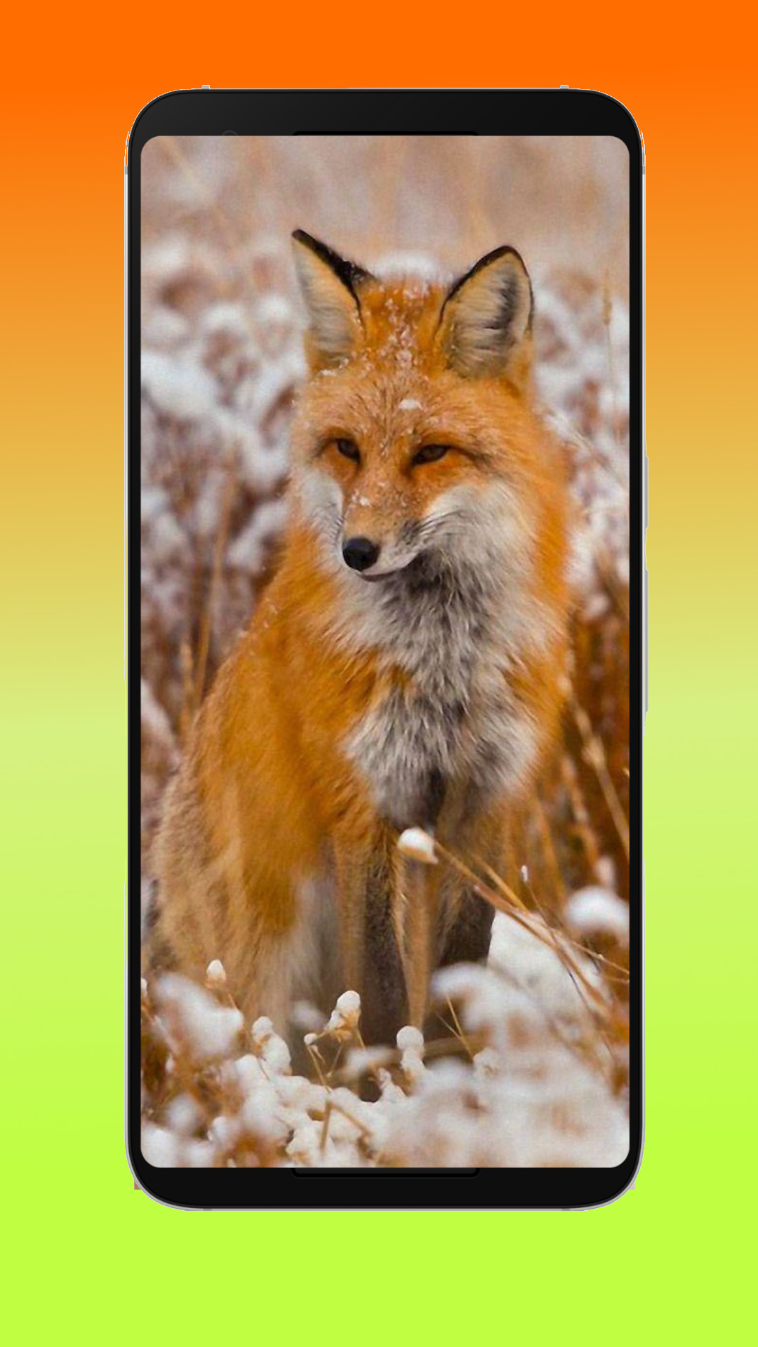 Animal Wallpapers