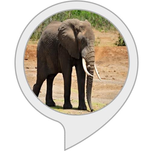 Mein Elefant