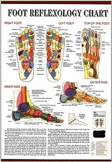 Foot Reflexology Chart- Wall Map- English Version (Chinese Edition)