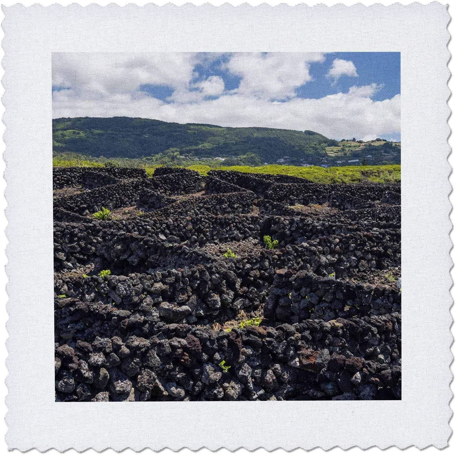 3dRose Danita Delimont - Portugal Q New 5% OFF life near Biscoitos. Vineyard