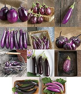David's Garden Seeds Collection Set Eggplant Purple Hybrid EH7586 (Purple) 11 Varieties 325 Seeds (Non-GMO, Hybrid)