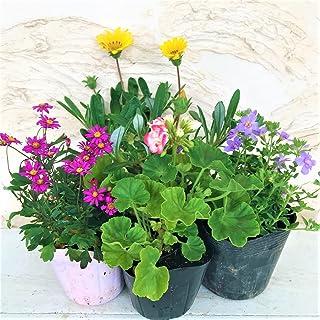 はなみどり 季節のおまかせ寄せ植えセット 4株 花苗 園芸 ガーデニング