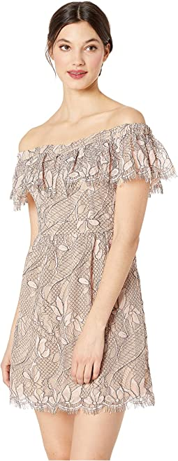 Terrace Scallop Lace Mini Dress