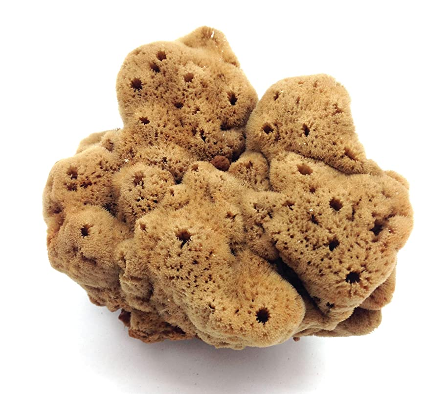 PEPPERLONELY 1 PC Natural Sea Sponges, Assorted Shapes, 4 Inch ~ 6 Inch