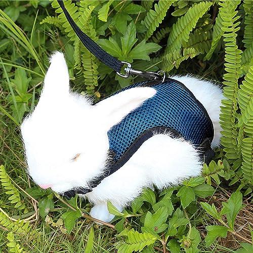 Accesorios para conejos: Amazon.es
