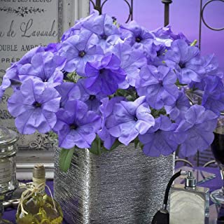 Evening Scentsation Spreading Petunia Seeds 5 Seeds AG002
