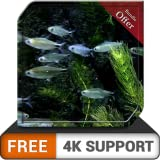 FREE Small Fish Tank HD - tiny beautiful fish aquarium on your HDR 4K TV, 8K TV and Fire Devices as a wallpaper, Decoration for Christmas Holidays, Theme for Mediation & Peace