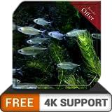 Pecera pequeña gratis HD: pequeño y hermoso acuario de peces en su televisor HDR 4K, televisor 8K y dispositivos de fuego como fondo de pantalla, decoración para las vacaciones de Navidad, tema para l