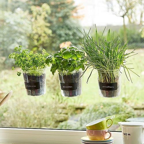 Vaso piante aromatiche: Amazon.it