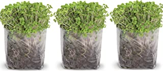 Pop Up Microgreens Kit (Broccoli) – Just Add Water and Seed. Perfect Size, a Quick, Smart, Nutritious Meal. Includes Fiber Soil in a Bag, Broccoli Seed. Super Health Benefits, Easy Grow/Delicious.