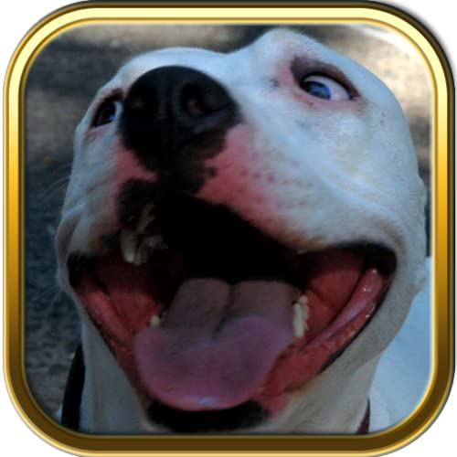 Pitbulls Dogs Jigsaw Puzzle Games