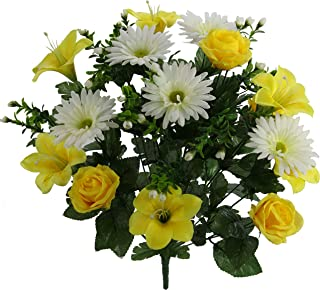 Best yellow rose plant images Reviews