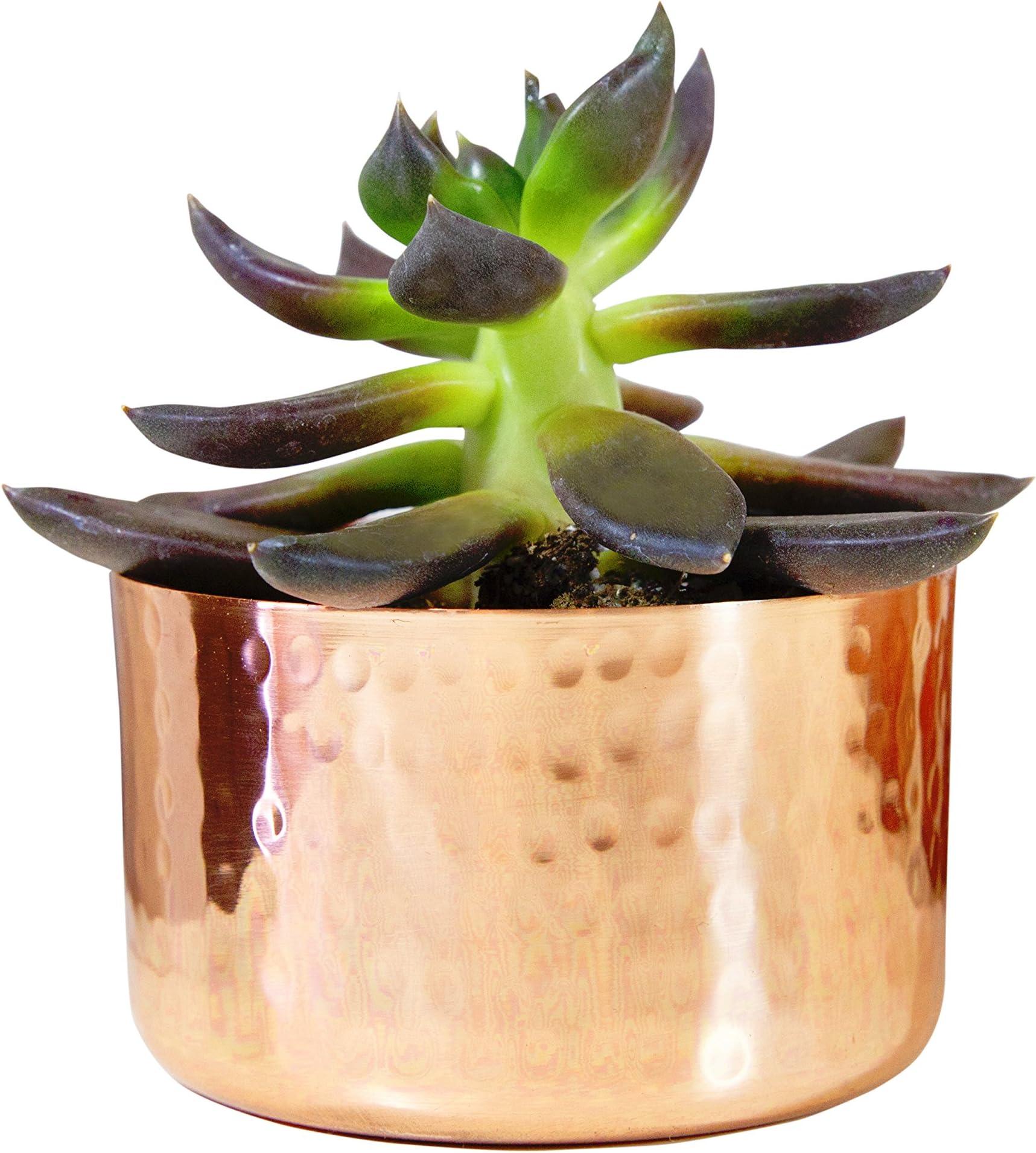 "Alchemade 3"" Hammered Copper Succulent Planter Plants"