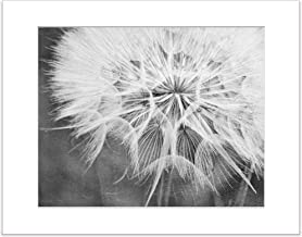 8x10 Inch Matted Print Black and White Dandelion Botanical Nature Flower Photo