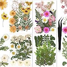 Glass and Resin Dish \u2022 dried butterfly \u2022 pressed flowers /& ferns \u2022 jewelry dish \u2022 knick knacks and trinkets