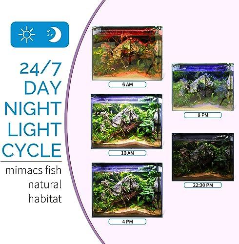 24/7 lighting cycle