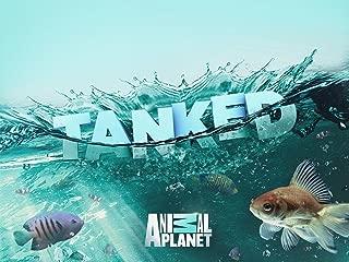 fish tank masters