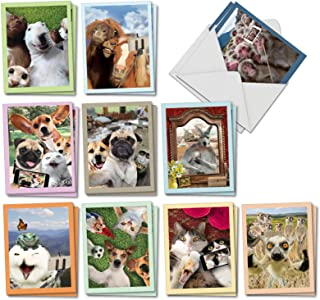 The Best Card Company - 20 Assorted Bulk Animal Cards Boxed (4 x 5.12 Inch) (10 Designs, 2 Each) - Animal Selfies AM2373OCB-B2x10