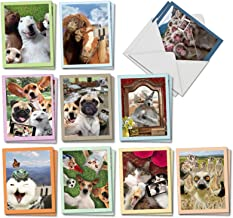 Animal Selfies - 20 Blank Funny Note Cards with Envelopes (4 x 5.12 Inch) - Boxed Assortment of All-Occasion Cards with Cats, Dogs, Horses - Notecard Set (2 Each, 10 Designs) AM2373OCB-B2x10