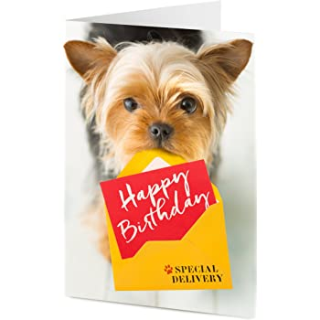 YORKSHIRE TERRIER CHARMING DOG GREETINGS NOTE CARD TWO CUTE DOGS YORKIE