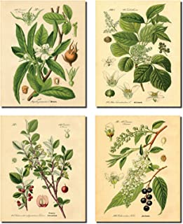 Gango Home Decor Popular Old-Fashioned Plant Botanical Prints; Four 11x14in Unframed Paper Posters