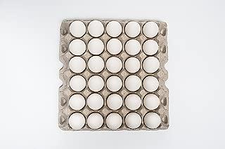 5 x 6 Filler Flat (Eggstra) - 140 pcs