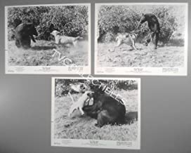 8x10 Photo Lot~ Disney's Old Yeller ~Animals ~Dog Fights Off Grizzly Bear